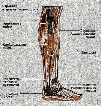 мне больберцовой кости внизу ноги обычно долго хранят